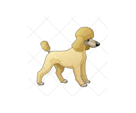 Realistic dog vector pack - animal vector graphics